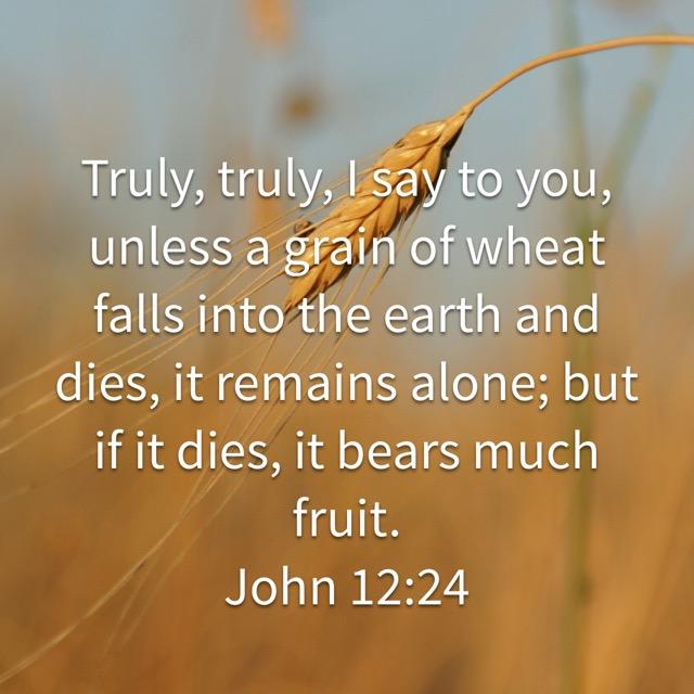 Bildresultat för john 12:24